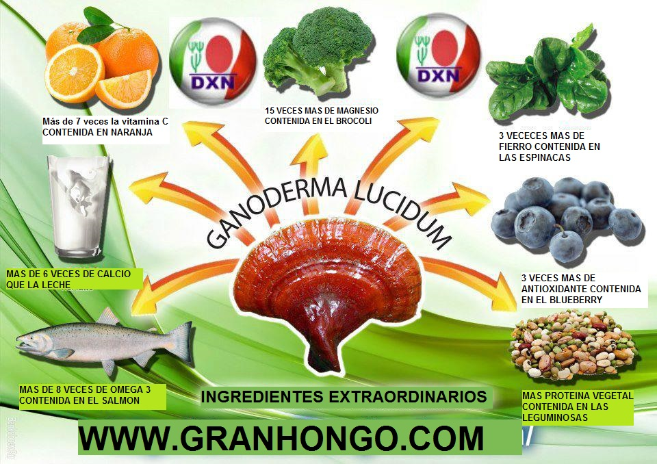 INGREDIENTES DEL GANODERMA